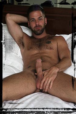 gay-stallion-preston-steel